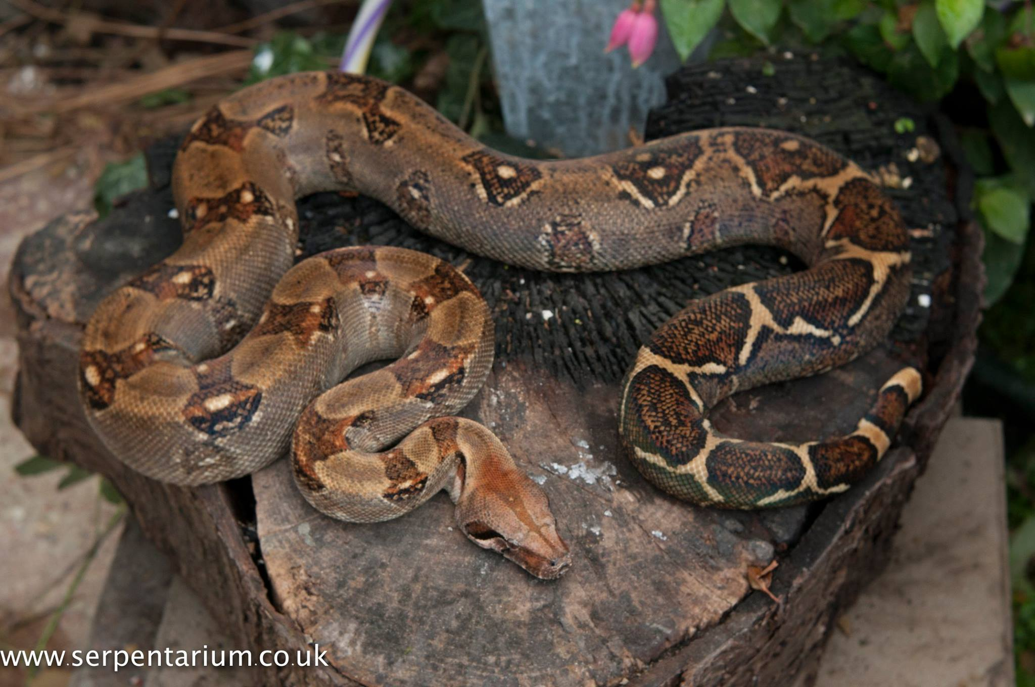 Serpentarium | Online collection of Locality Boa